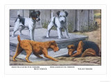 Fox Terrier Poster by Louis Agassiz Fuertes