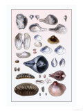 Shells: Sessile Cirripedes Poster by G.b. Sowerby