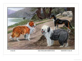 Collie, Old English Sheep Dog, Smooth Collie Prints by Louis Agassiz Fuertes