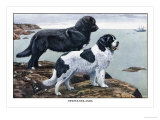 Two Newfoundlands Prints by Louis Agassiz Fuertes