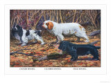 Cocker Spaniel, Clumber Spaniel, and Field Spaniel Prints by Louis Agassiz Fuertes