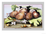 Dish of Figs with Jasmine and Small Pears Posters por Giovanna Garzoni