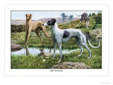 Greyhounds Prints by Louis Agassiz Fuertes