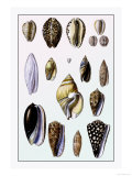 Shells: Convoltae and Orthocerata Prints by G.b. Sowerby