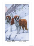 Two Saint Bernards Posters by Louis Agassiz Fuertes