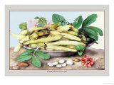 Dish of Broad Beans Posters por Giovanna Garzoni