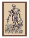 The Fourth Plate of the Muscles Poster von Andreas Vesalius