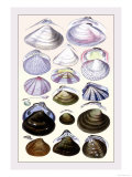 Shells: Dimyaria Prints by G.b. Sowerby