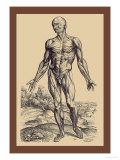 The First Plate of the Muscles Kunstdrucke von Andreas Vesalius