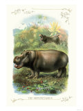 The Hippopotamus Prints