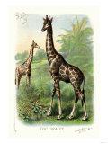 The Giraffe Prints