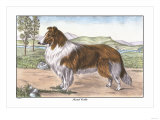 Scotch Collie Prints