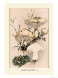 Agaricus Gambosus Prints by William Hamilton Gibson