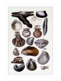Shells: Monomyaria Print by G.b. Sowerby