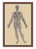 Nervous System Poster by Andreas Vesalius