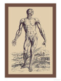 The Second Plate of the Muscles Posters by Andreas Vesalius
