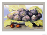Dish with Figs, Fig Leaves and Small Pomegranates Posters by Giovanna Garzoni
