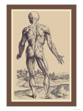 The Ninth Plate of the Muscles Prints by Andreas Vesalius