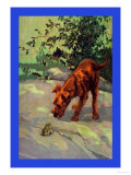 Irish Terrier Puppy Prints by Diana Thorne