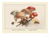 Boletus Subtomentosus and Boletus Chrysenteron Prints by William Hamilton Gibson