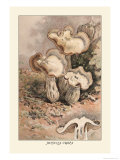 Helvella Crispa Prints by William Hamilton Gibson