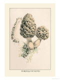 Morchella Esculenta Prints by William Hamilton Gibson