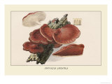 Fistulina Hepatica Print by William Hamilton Gibson