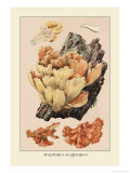 Polyporus Sulphureus Prints by William Hamilton Gibson