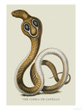 The Cobra de Capello Prints by J. Forbes