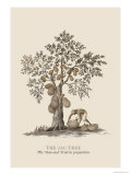 The Jac Tree Print by Baron De Montalemert
