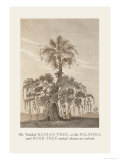 The Banian Tree and Burr Tree, United Prints by Baron De Montalemert
