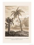 Hindu Peasant Ascending Cocoa Nut Tree Prints by Baron De Montalemert