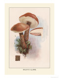 Boletus Scaber Prints by William Hamilton Gibson