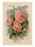 Scott's Roses and Other Beautiful Flowers Prints