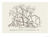 Ramification of a Banian Tree Prints by Baron De Montalemert