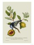 Blue Banana Bird at Rio de Janeiro Prints by J. Forbes