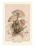 Agaricus Procerus Prints by William Hamilton Gibson