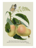 The Mazagon Mango and the Papilio Bolina Affiches par J. Forbes