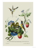 Taylor Birds and Fruit Bearing Convolvuls Affiches par J. Forbes
