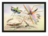 Three Insects Prints by James Duncan