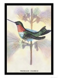 Hummingbird: Trochilus Colubris Print by Sir William Jardine