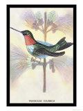 Hummingbird: Trochilus Colubris Print by Sir William Jardine