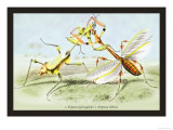 Insects: Empusa Gonaylodes and E. Lobines Print by James Duncan