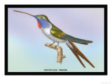 Hummingbird: Trochilus Vesper Affiches par Sir William Jardine