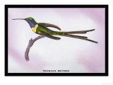 Hummingbird: Trochilus Enicurus Prints by Sir William Jardine