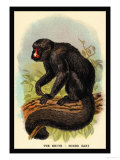 The White-Nosed Saki Poster by G.r. Waterhouse