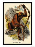 The Orang-Utan Print by G.r. Waterhouse
