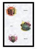 Beetles of Sumatra, Java and America Prints by Sir William Jardine