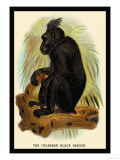 The Celebean Black Baboon Poster by G.r. Waterhouse