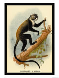 Boutourlini's Guenon Print by G.r. Waterhouse